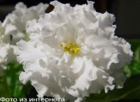 ЕК-Белая Королева (Е.Коршунова)